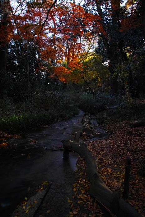 紅葉 糺の森 2016 _f0021869_23344517.jpg