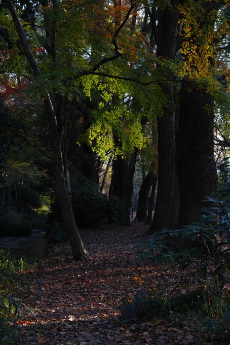 紅葉 糺の森 2016 _f0021869_23364572.jpg