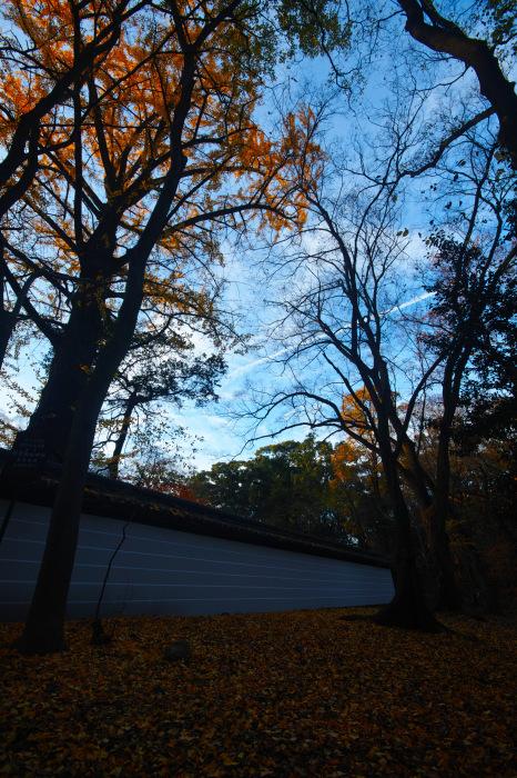 紅葉 糺の森 2016 _f0021869_23373189.jpg