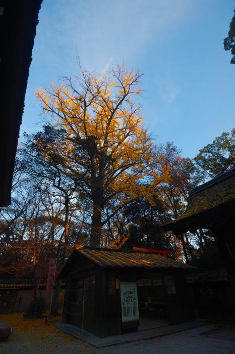紅葉 糺の森 2016 _f0021869_23410296.jpg