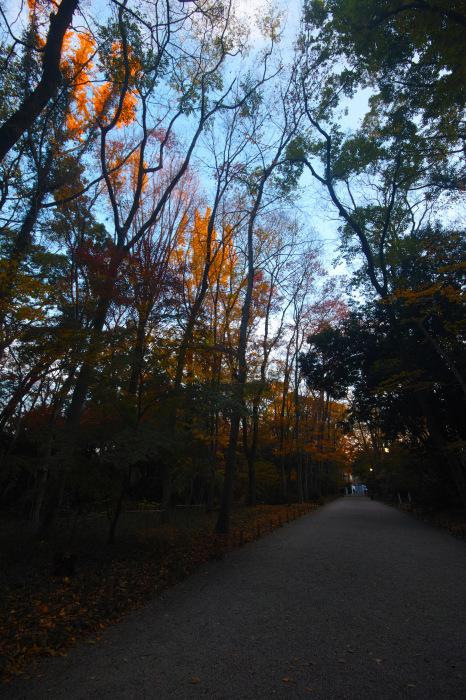 紅葉 糺の森 2016 _f0021869_23420576.jpg