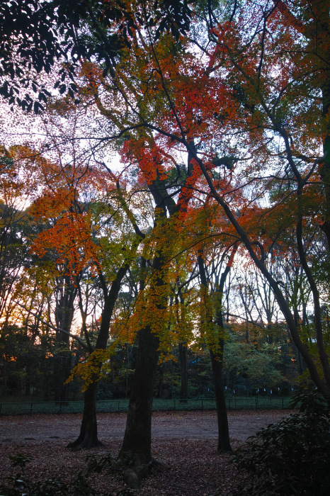 紅葉 糺の森 2016 _f0021869_23423576.jpg