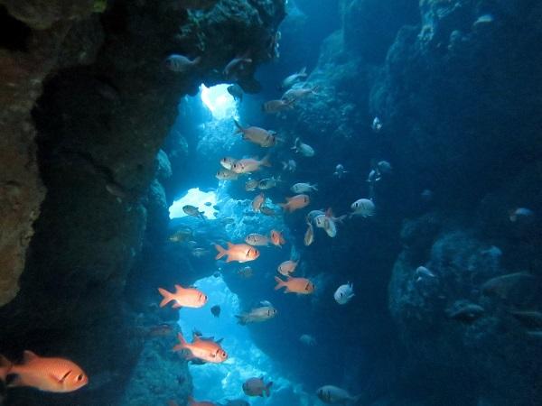 水納島、瀬底島でファンダイビング!!_a0156273_15584358.jpg