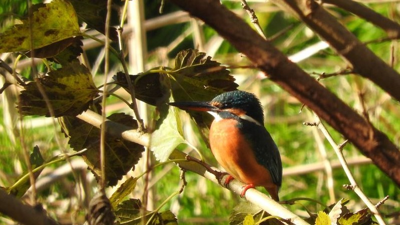 山と鳥を愛するアナパパ                            ブログトップ