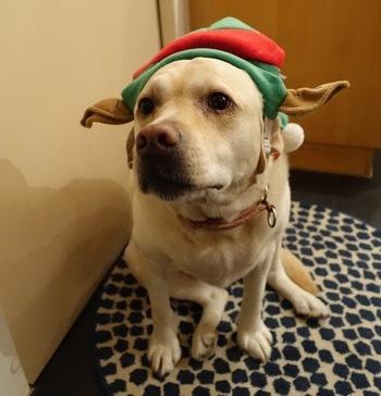 クリスマスパーティー第一弾_d0133485_11480234.jpg