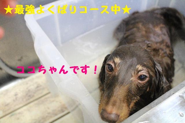 断シャリ!!_b0130018_9133769.jpg