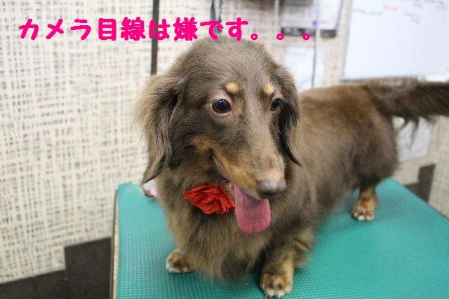 断シャリ!!_b0130018_9143893.jpg