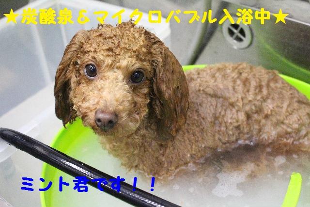 断シャリ!!_b0130018_9154373.jpg