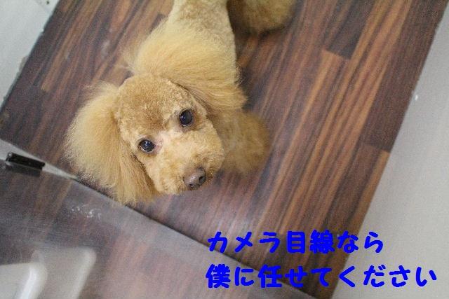 断シャリ!!_b0130018_9171775.jpg