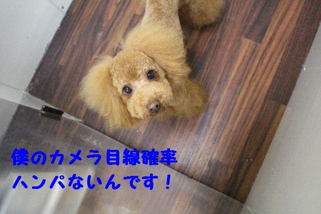 断シャリ!!_b0130018_917977.jpg