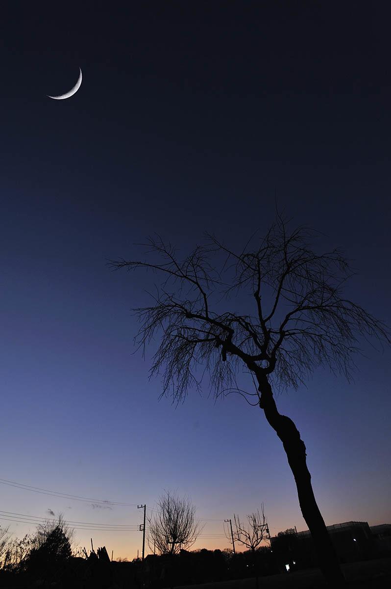 シヴァの月_a0059621_20243427.jpg