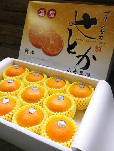 """究極の柑橘「せとか」 今週末の急激な""""寒""""に備え匠は一切の手を抜かず準備をしていました!_a0254656_1744349.jpg"""