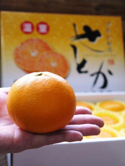 """究極の柑橘「せとか」 今週末の急激な""""寒""""に備え匠は一切の手を抜かず準備をしていました!_a0254656_18445146.jpg"""