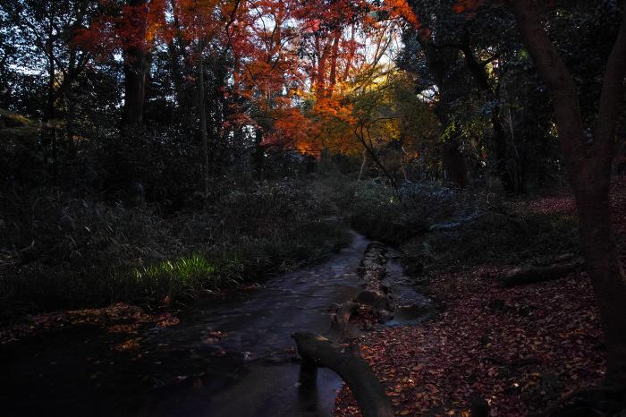 紅葉 糺の森 2016 _f0021869_15055023.jpg
