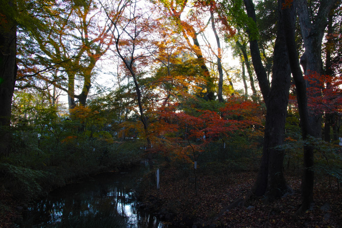 紅葉 糺の森 2016 _f0021869_17354757.jpg
