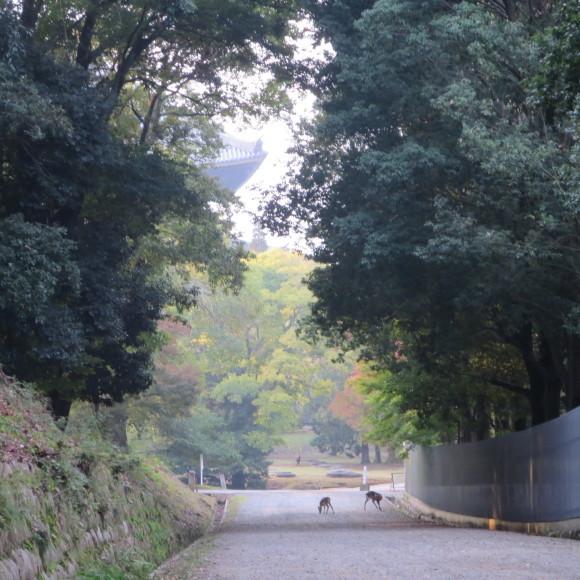 山の辺の道(北)を奈良から天理まで歩いた話0_c0001670_20113010.jpg