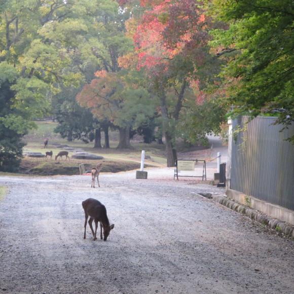 山の辺の道(北)を奈良から天理まで歩いた話0_c0001670_20113549.jpg