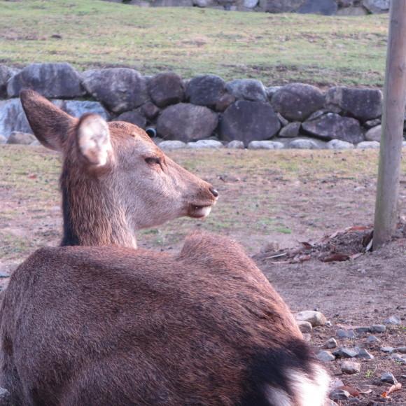 山の辺の道(北)を奈良から天理まで歩いた話0_c0001670_20123425.jpg