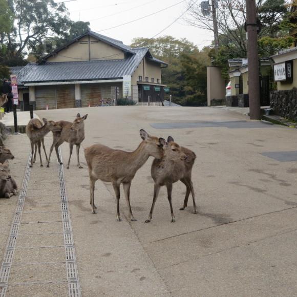 山の辺の道(北)を奈良から天理まで歩いた話0_c0001670_20124478.jpg