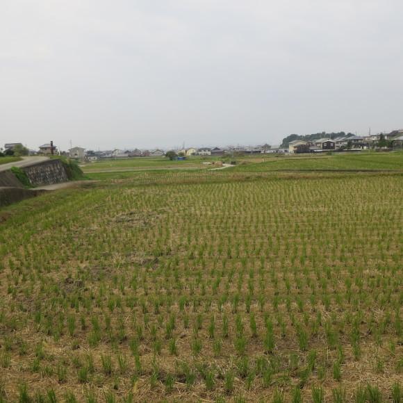 山の辺の道(北)を奈良から天理まで歩いた話0_c0001670_20161926.jpg
