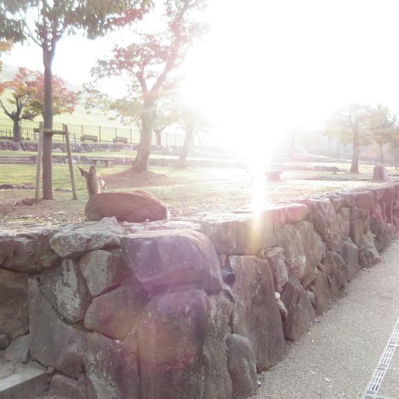山の辺の道(北)を奈良から天理まで歩いた話0_c0001670_20285794.jpg