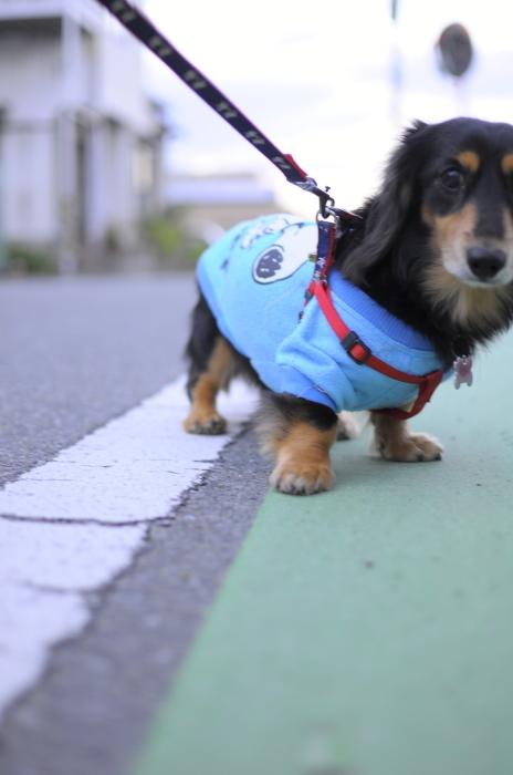 散歩。_a0157480_00054177.jpg