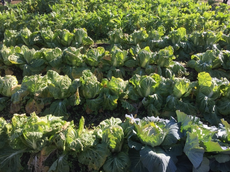 野菜収穫!_f0356588_19123006.jpg