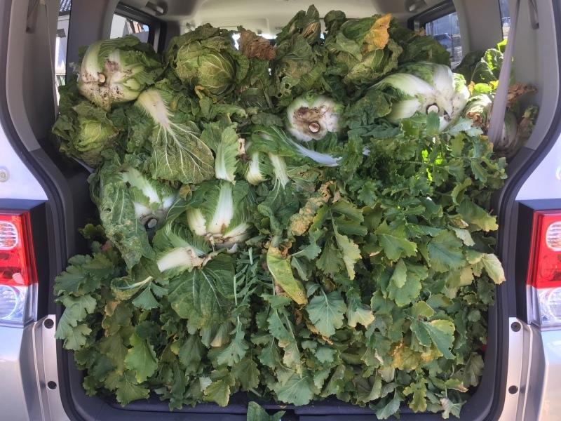野菜収穫!_f0356588_19192322.jpg