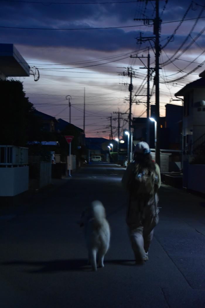 きょうの朝んぽ~♪ (^o^)_c0049299_22394229.jpg