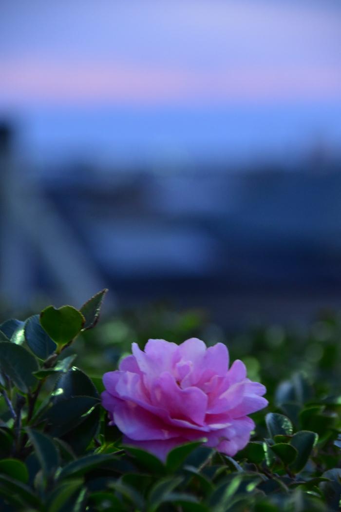 きょうの朝んぽ~♪ (^o^)_c0049299_22475401.jpg