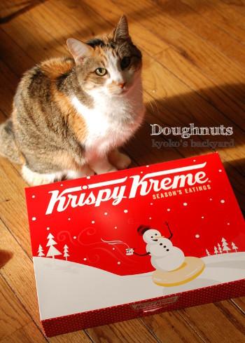 ドーナツ、猫はダメなの?_b0253205_05181286.jpg