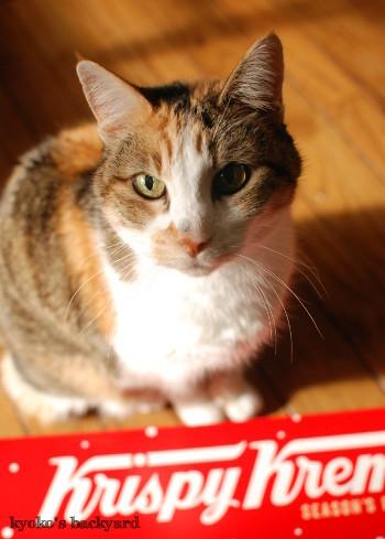ドーナツ、猫はダメなの?_b0253205_05183479.jpg