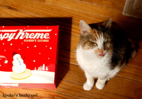 ドーナツ、猫はダメなの?_b0253205_05190231.jpg