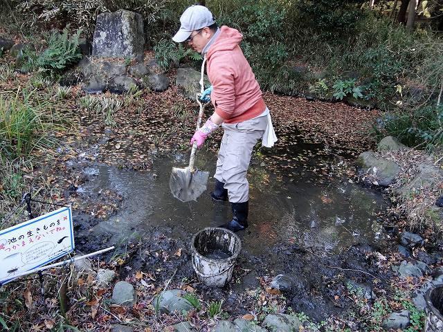 トンボ池の泥さらい&生きもの救出劇_b0049307_01362913.jpg