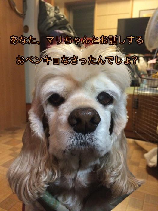 b0067012_01140636.jpg