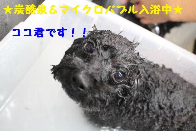 断シャリ!!_b0130018_9292744.jpg