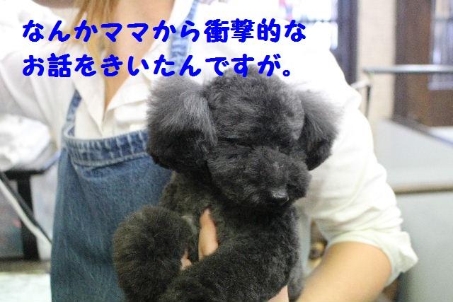 断シャリ!!_b0130018_9303877.jpg