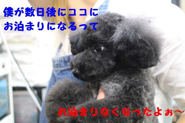 断シャリ!!_b0130018_9304549.jpg