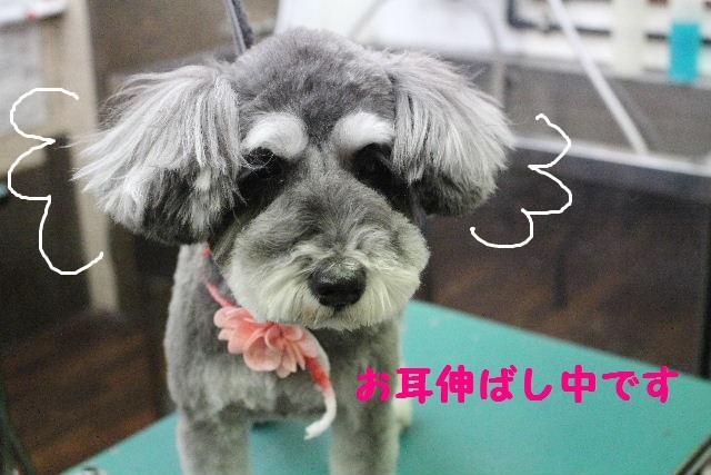 断シャリ!!_b0130018_9331539.jpg