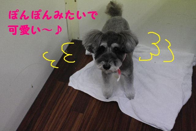 断シャリ!!_b0130018_9332924.jpg