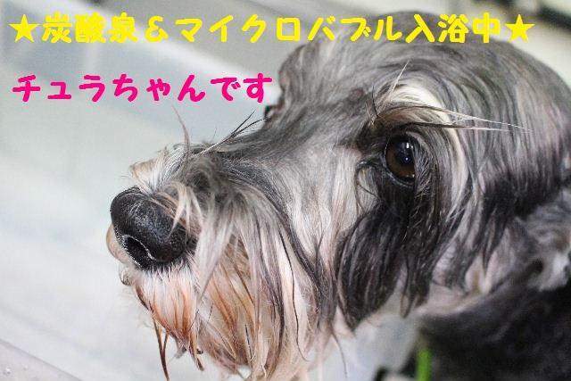 断シャリ!!_b0130018_9343671.jpg