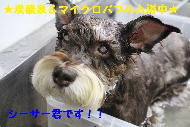 断シャリ!!_b0130018_9351156.jpg