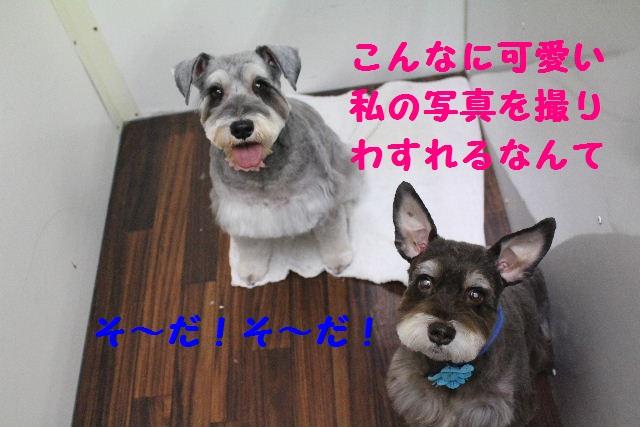 断シャリ!!_b0130018_9363712.jpg