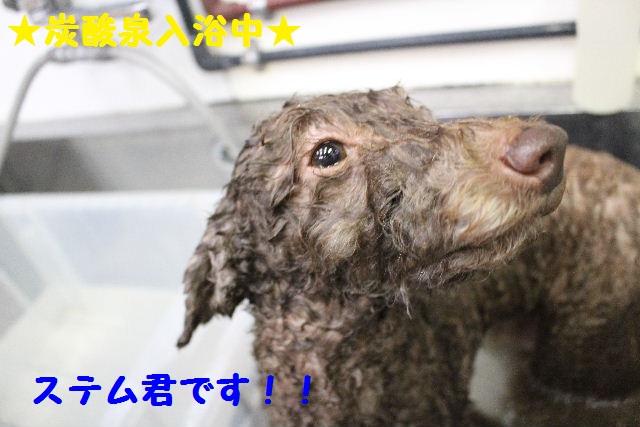 断シャリ!!_b0130018_9381888.jpg
