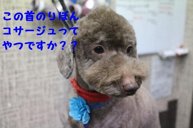 断シャリ!!_b0130018_939185.jpg