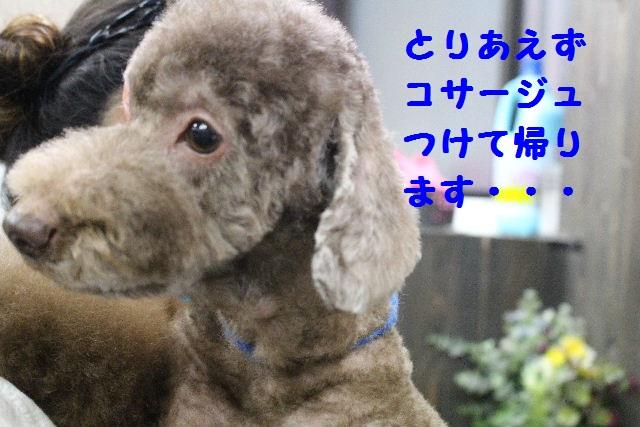 断シャリ!!_b0130018_9392697.jpg