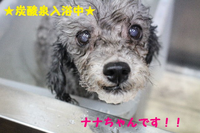 断シャリ!!_b0130018_9412464.jpg