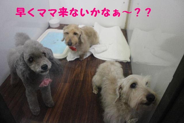 断シャリ!!_b0130018_943183.jpg