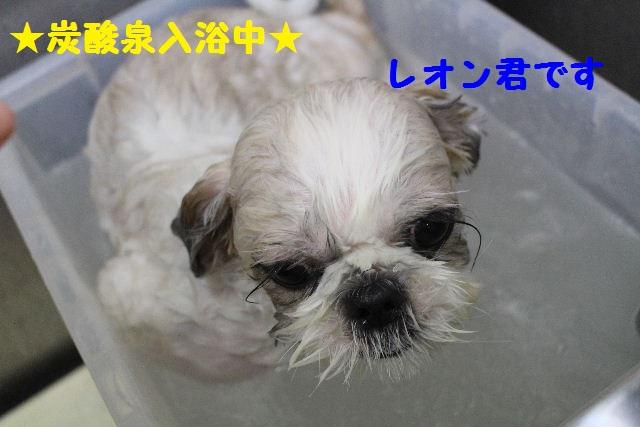 断シャリ!!_b0130018_9435997.jpg