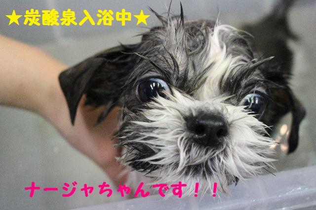 断シャリ!!_b0130018_9442138.jpg